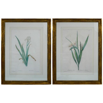 Pair of Botanical Stipple Engravings by P. J. Redoute